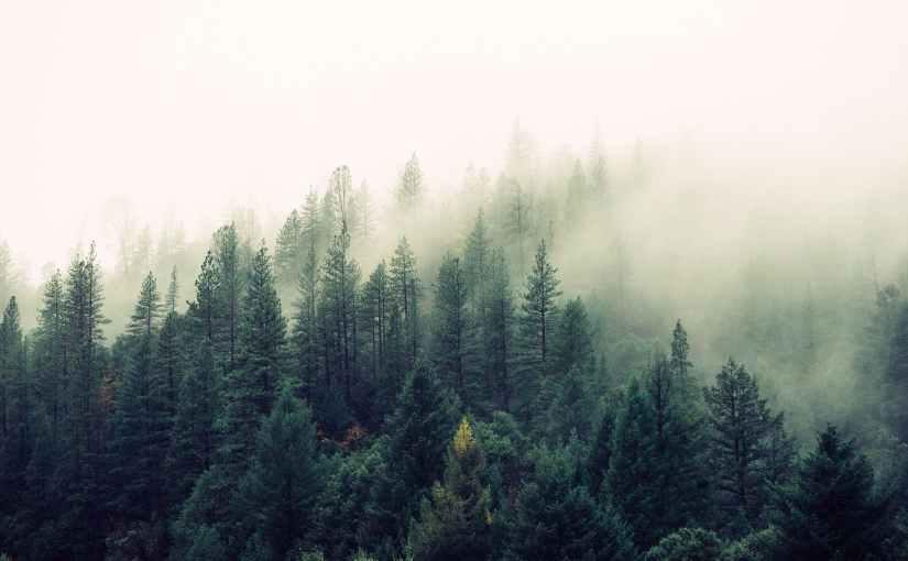 Tulgey Wood